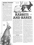 Animal Families: Rabbits and Hares