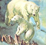 Who's Who at the Zoo. Polar Bear