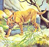 Who's Who in the Zoo: The King's Pet Cat