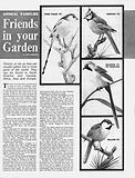 Animal Families: Friends in Your Garden