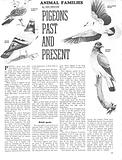 Animal Families: Pigeons Past and Present