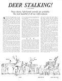 Animal Families: Deer Stalking!
