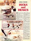 Animal Families: Ducks and Drakes