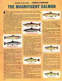 Animal Families: The Magnificent Salmon
