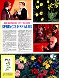 The Flowers That Bloom: Spring's Heralds