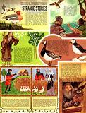 Legends Surrounding British Birds: Strange Stories