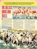 The Delta's Birds and Bulls (The Camargue)