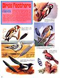 Birds of the UK and their feathers