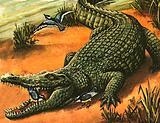 Egyptian Plover and Nile Crocodile