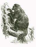 Avahi: Indri