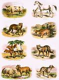 Biblical natural history