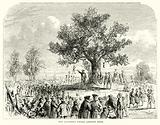 The Colonists under Liberty Tree