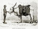 Bhisti, or Water-Carrier