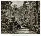 A Road through an Australian Forest
