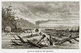 Rafts of Trees on the Missouri