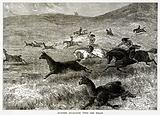Hunting Guanacos with the Bolas