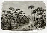 Scene on a Tributary of the Nile (Bulrushes, Ibis, etc.)