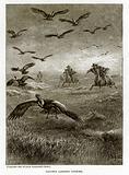 Gauchos Lassoing Condors