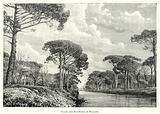 Canals and Pine-Forest of Ravenna