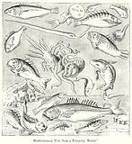 Mediterranean Fish, from a Pompeian Mosaic