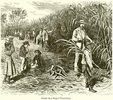 Scene on a Sugar Plantation