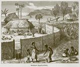Tongan Plantation