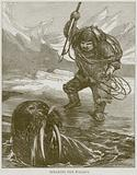 Spearing the Walrus