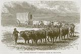 "The ""Prairie Schooner"" – Emigrant Wagon on the Plains"