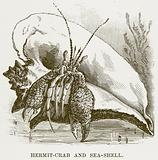 Hermit-Crab and Sea-Shell