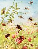 The busy bees and their cousins