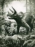 Mr. Triceratops in his native wilds