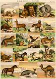 Bible Natural History