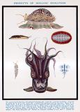 Products of Mollusc evolution