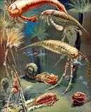 Life in Paleozoic Seas