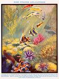 Australian coral reef