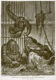 Orang-Utan and Chimpanzees in the Berlin Aquarium