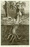 """Gigantic Cuttle-Fish Hooked by the French Steamer """"Alecton"""" Off Teneriffe"""