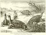Gigantic Land Tortoises from the Galapagos Islands
