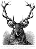 """Head of Red Deer, in which the Antler is fully developed and the """"Velvet"""" has disappeared"""