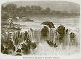 Hippopotami at the Falls of the River Senegal