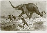 Aggageers Hunting an Elephant