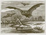 Pipistrelle in Flight