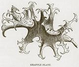 Grapple Plant