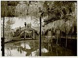 The Shinji-No-Ike Pond, and Wistaria, Kameido