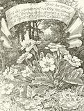 Pale Primroses