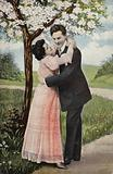 Couple embracing under a blossom tree