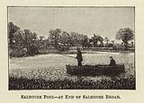 Salhouse Pool-at End of Salhouse Broad