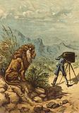 Promising outlook, lion observes photographer