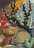 Group of Corals