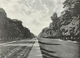 Chestnut Avenue, Bushy Park